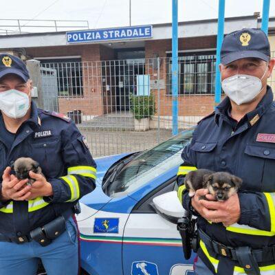 Cuccioli di cane in autostrada salvati dalla Polizia Stradale di Orvieto