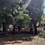 Precisazione Amministrazione Comunale su abbattimento piante presso area Stazione ferroviaria di Orvieto scalo